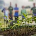 Pflanzenschutz und -pflege